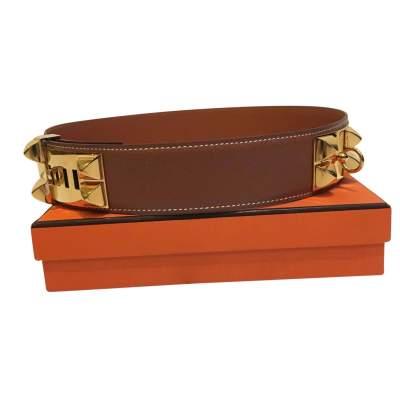 Golden Dog collar Belt-0